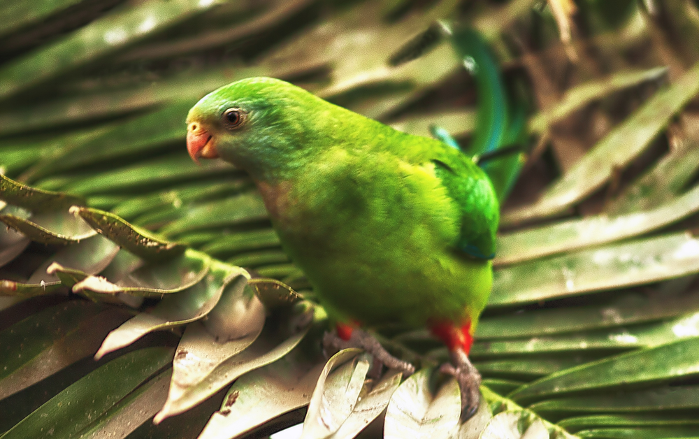 Up top Read about The king parrots Comments