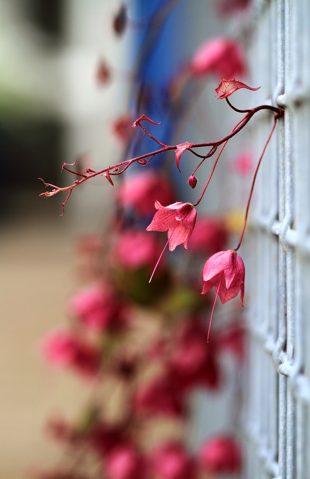Flower fence Comments