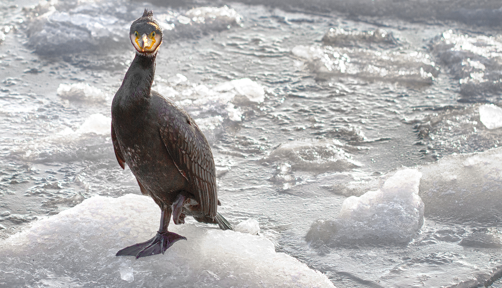 Yes I am wet and freezing Read about The European shag Comments