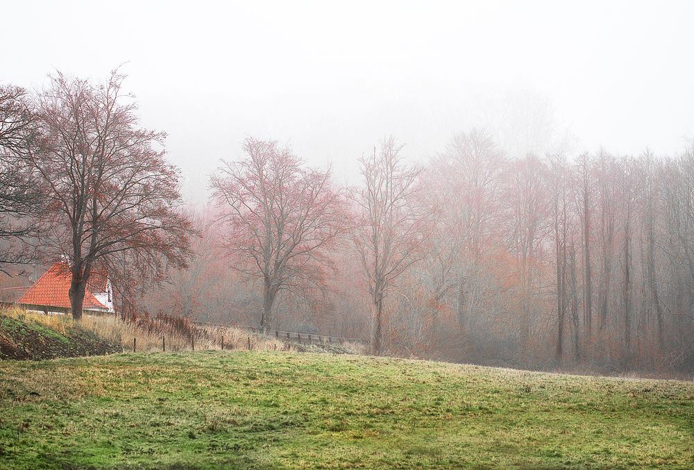 A wet and foggy December day Read about Svendborg Comments