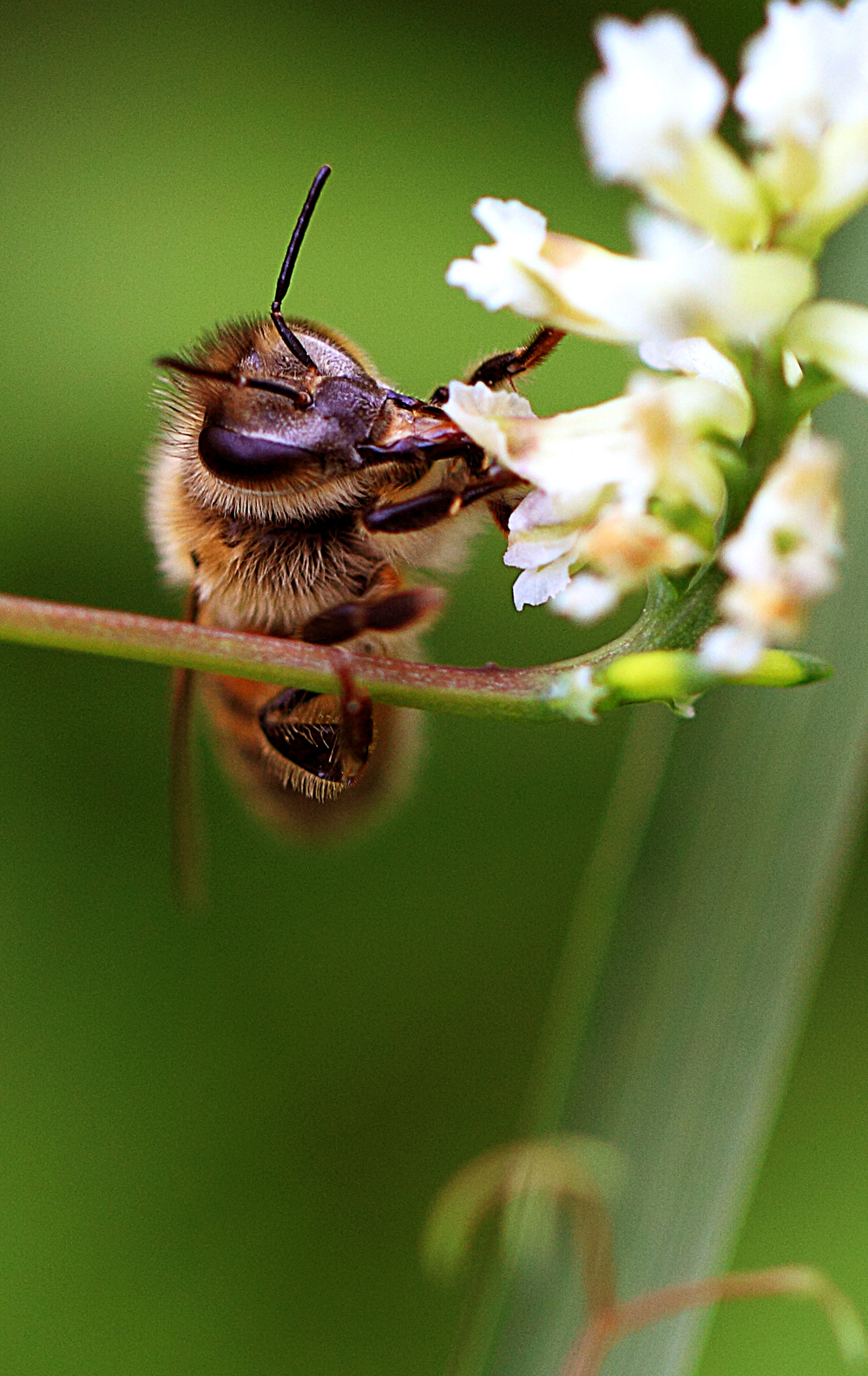 There will be honey later Read about The honey bee Comments