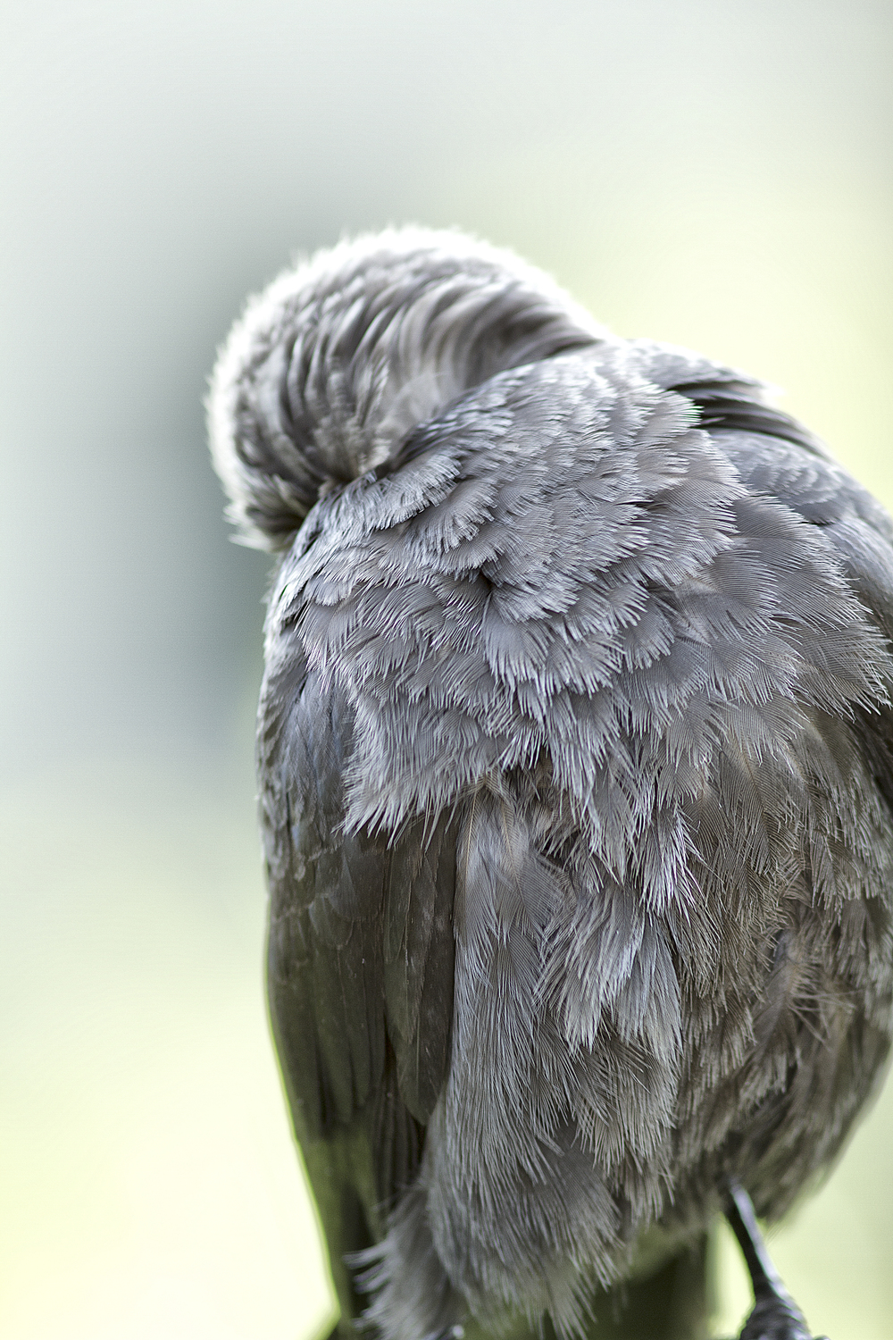 I can scratch my own back Read about The western jackdaw Comments