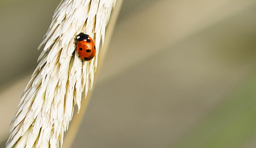Small is also entitled Read about The Coccinellidae (/ˌkɒksɪˈnɛlɪdaɪ/) Comments