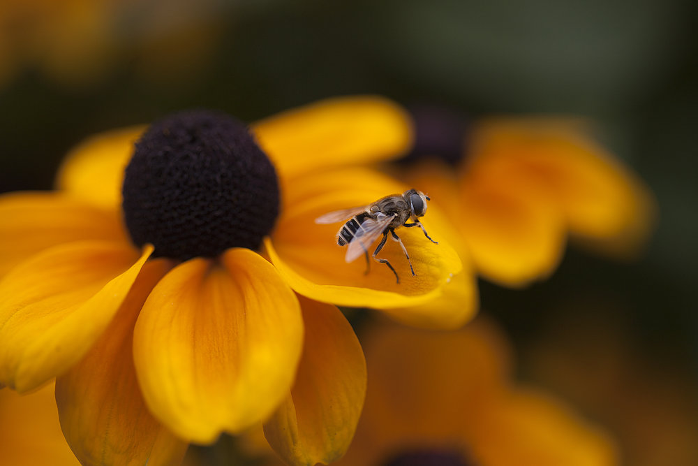 It's all about where you choose to be photographed Read about The Hoverflies Comments