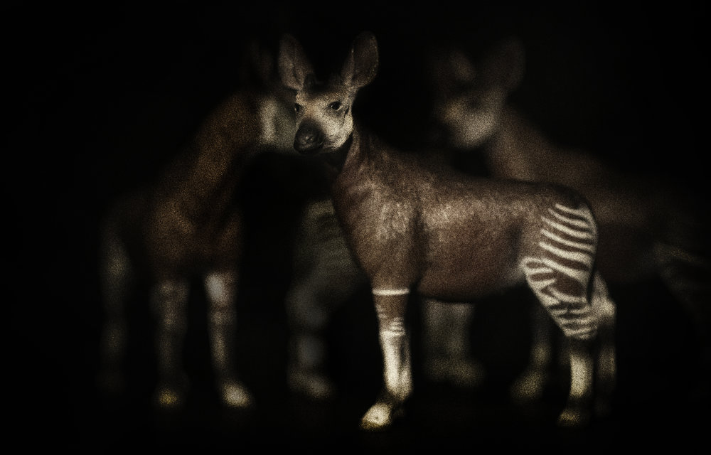 Serengeti night Comments