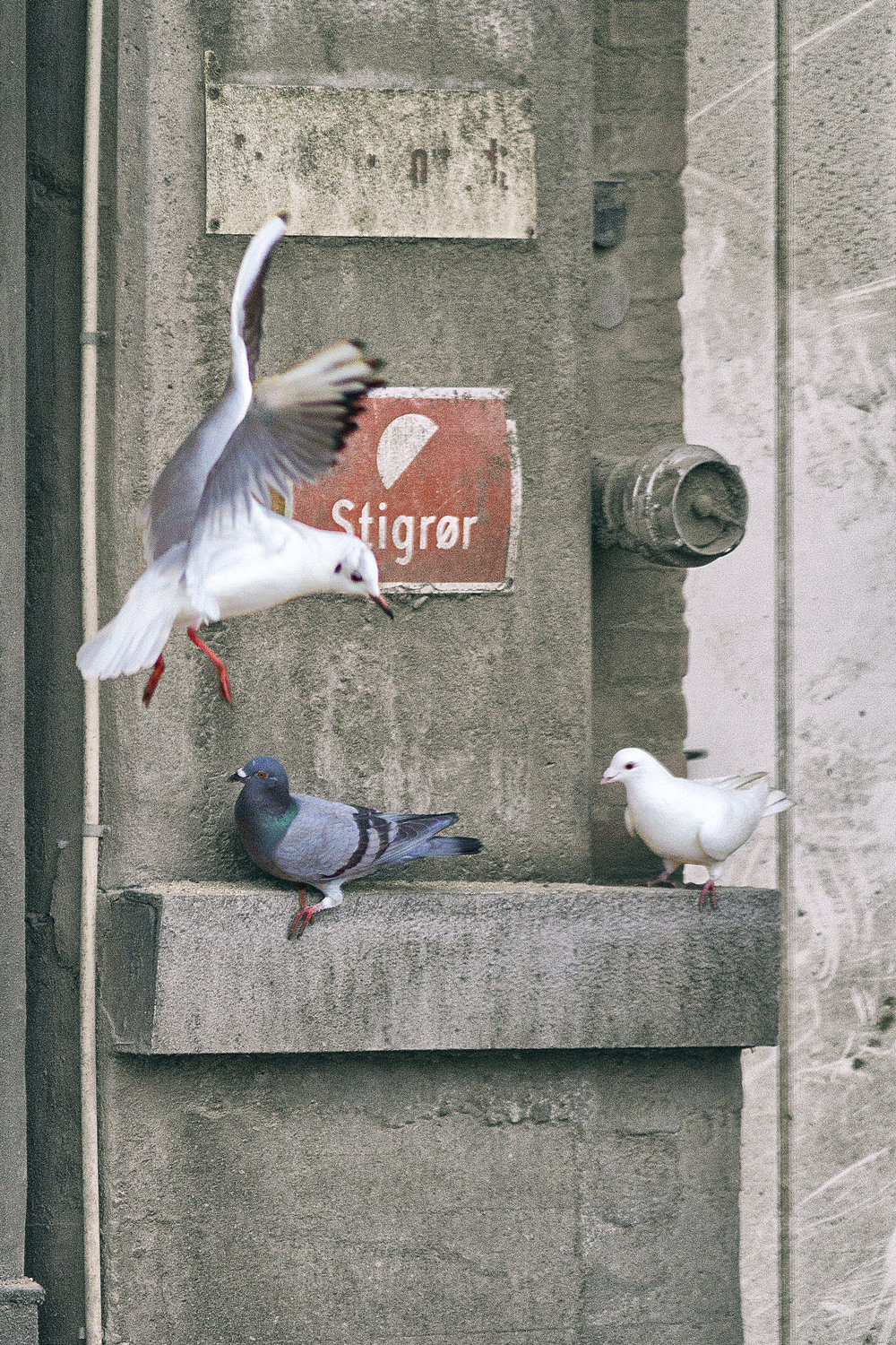 Sorry no room Read about The Pigeons/doves Comments