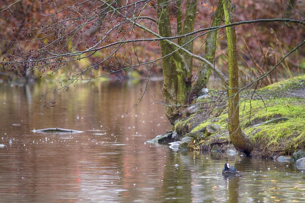 Autumn pond Comments