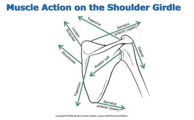There's so much going on at the shoulder, it's a wonder how more people aren't in pain!