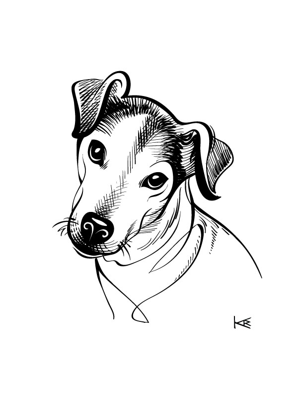 To raise money for KEXP one year I drew friends' dogs. This is Rocket, beloved pal of a friend...
