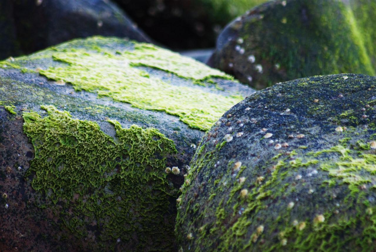 noosa - little cove 2011 - abstract-mossy rocks.jpg