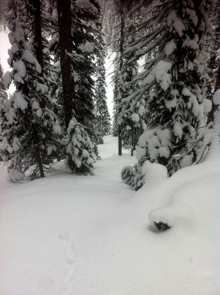 Tree skiing here is as good as it gets in the Rockies