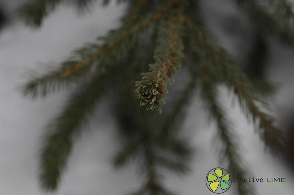 Tree Creative LIME.jpg