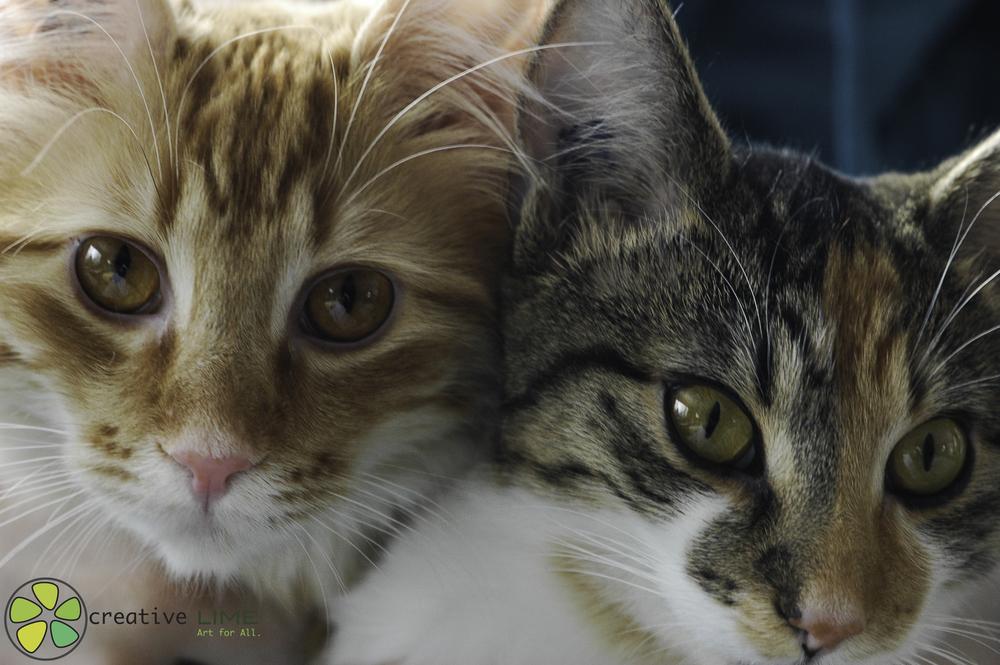 Kitten Creative LIME.jpg