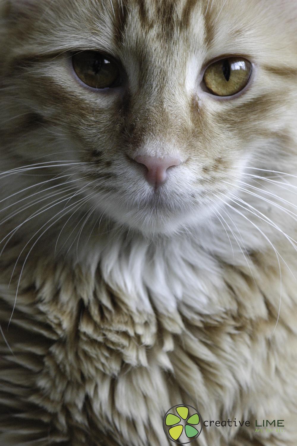 Cat Creative LIME.jpg