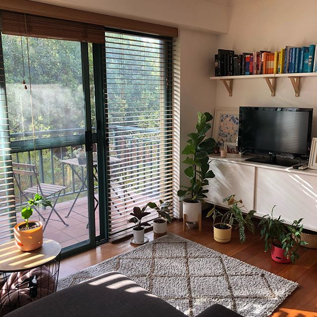 Photo of my favourite plant corner in our little apartment. No filter needed. #plantparent #houseplants