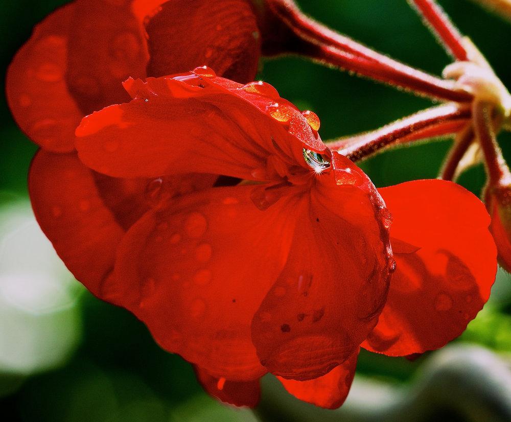 sunstar flower.jpg