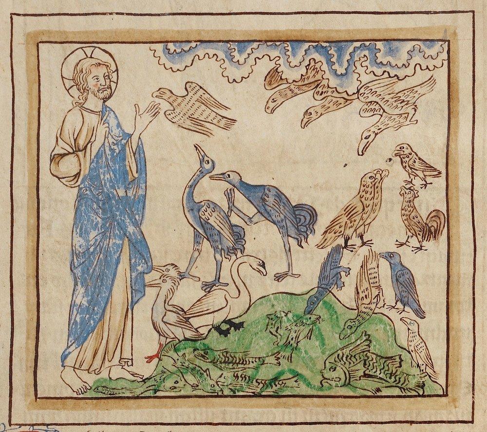 A criação das aves e dos peixes (detalhe), Bestiário Northumberland  (Inglaterra, c. 1250-60), ms. 100, fol. 3r. The J. Paul Getty Museum, Los Angeles