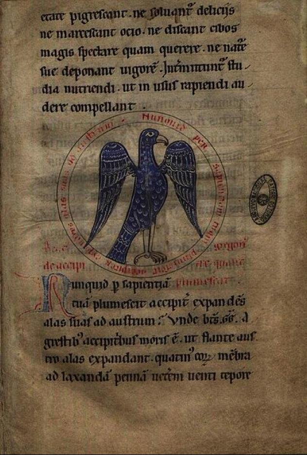 Figura 3.  Ilustração de um gavião apresentada na obra  Livro das Aves  (Fouilloy, 1184)  Autor:  Egeas  Fonte:   https://commons.wikimedia.org/wiki/File:Livro_das_Aves_0033_De_Accipitre.jpg