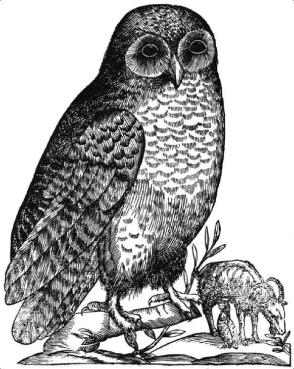 Figura 4.  Ilustração de uma coruja apresentada na obra  Ornithologiae, hoc est de Avibvs Historiae libri XII  (Aldrovandi, 1599-1603)  Autor:  Ulisse Aldrovandi  Fonte:   https://commons.wikimedia.org/wiki/File:Aldrovandi_Owl.png