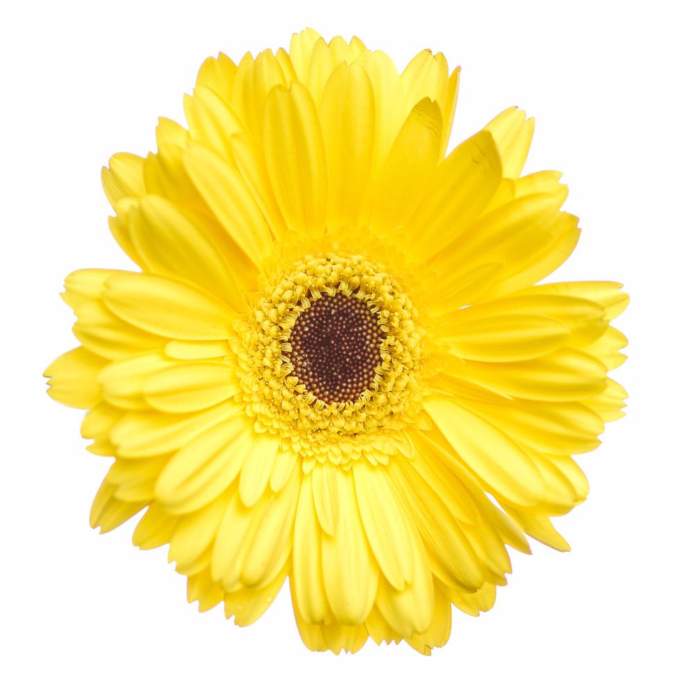 Flowers-102.jpg