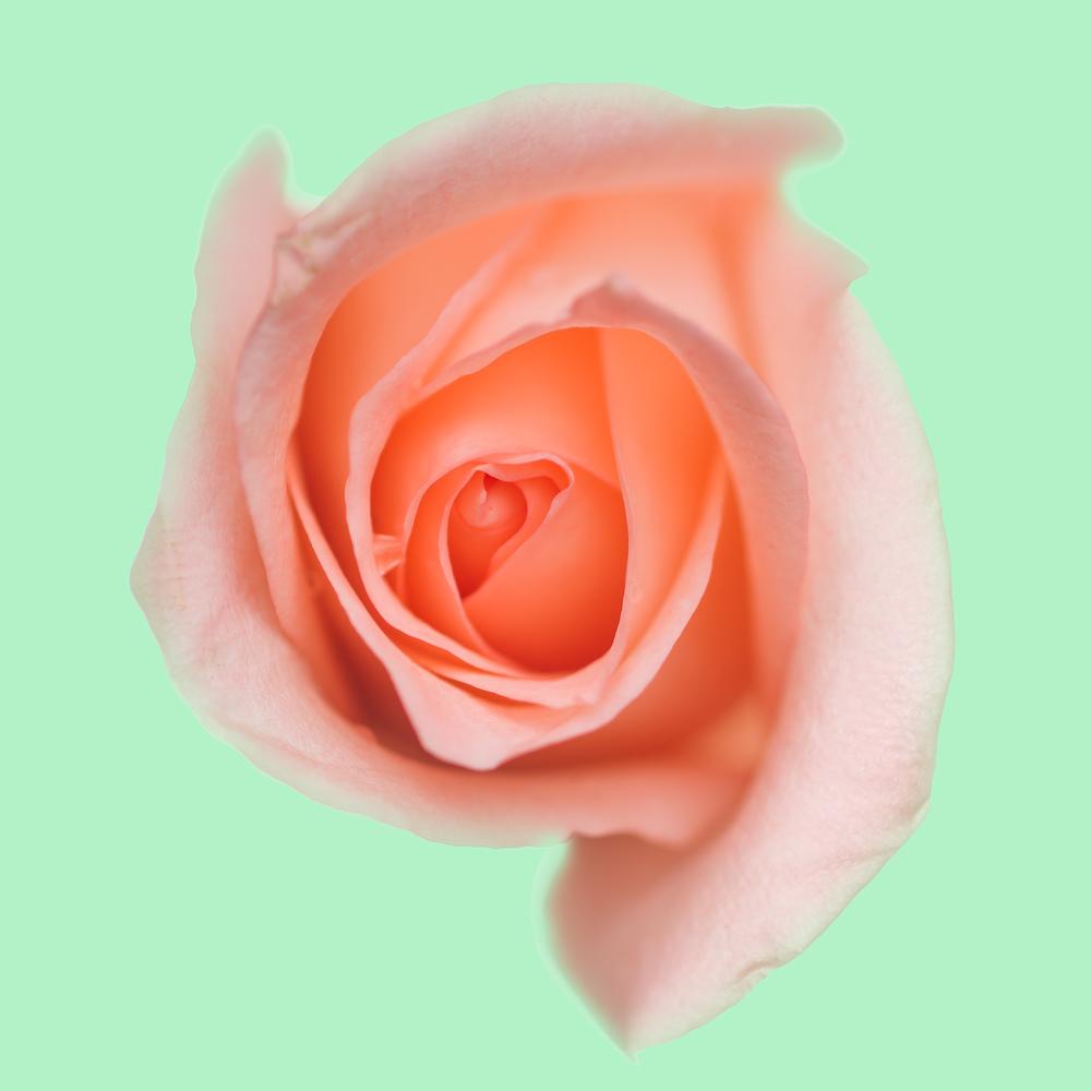 Flowers-101-Edit.jpg