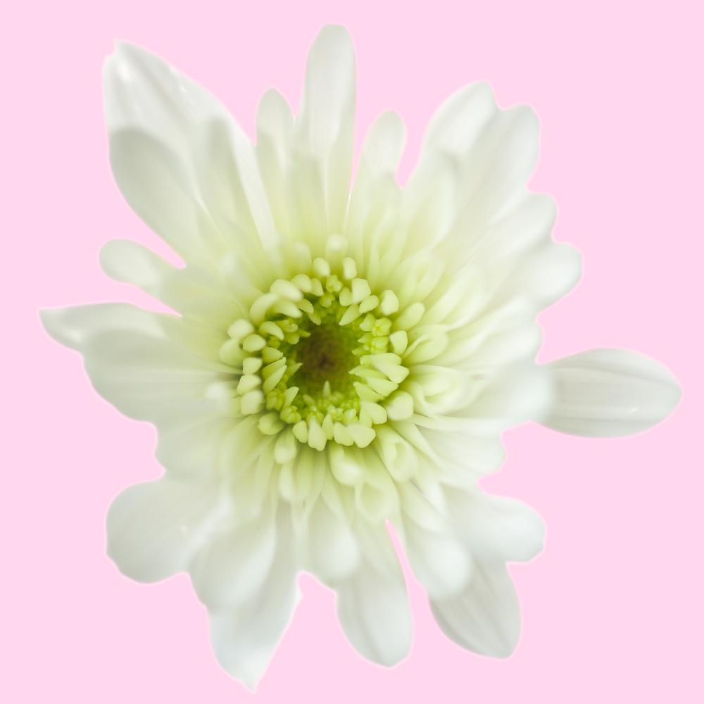 Flowers-100-Edit.jpg