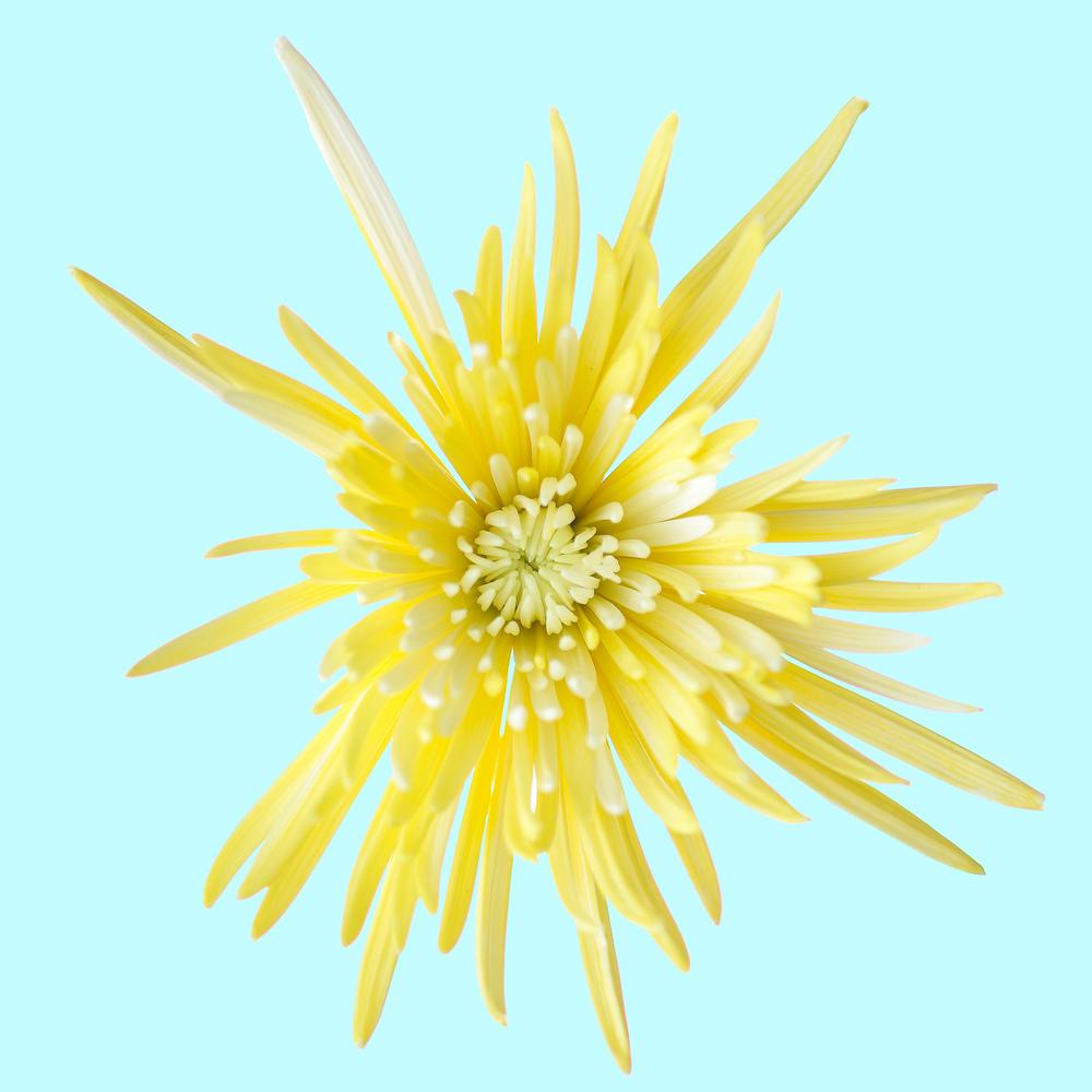 Flowers-103-Edit.jpg