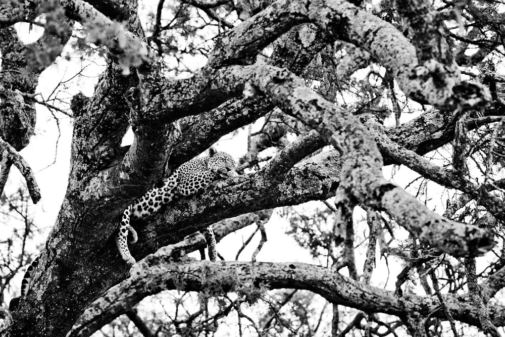 Tanzania_FR_8638bw.jpg