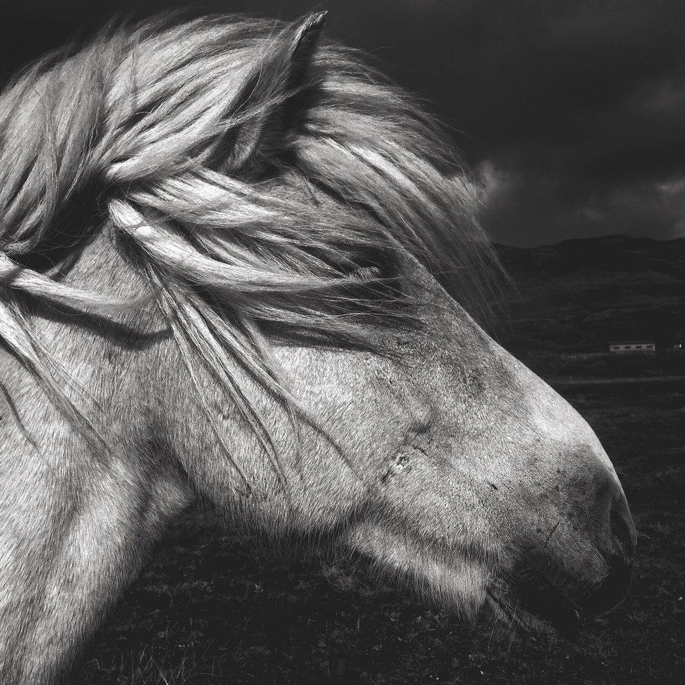 AustinMann-Iceland-03.JPG