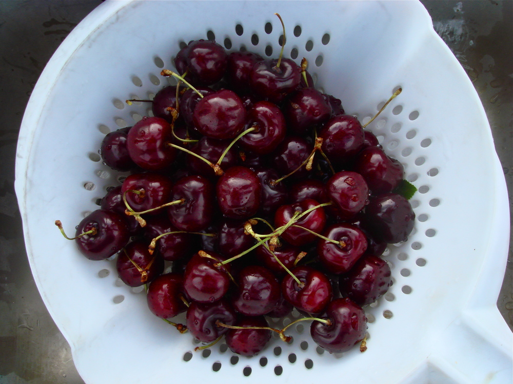 Freshly Picked Cherries             B.C., Canada