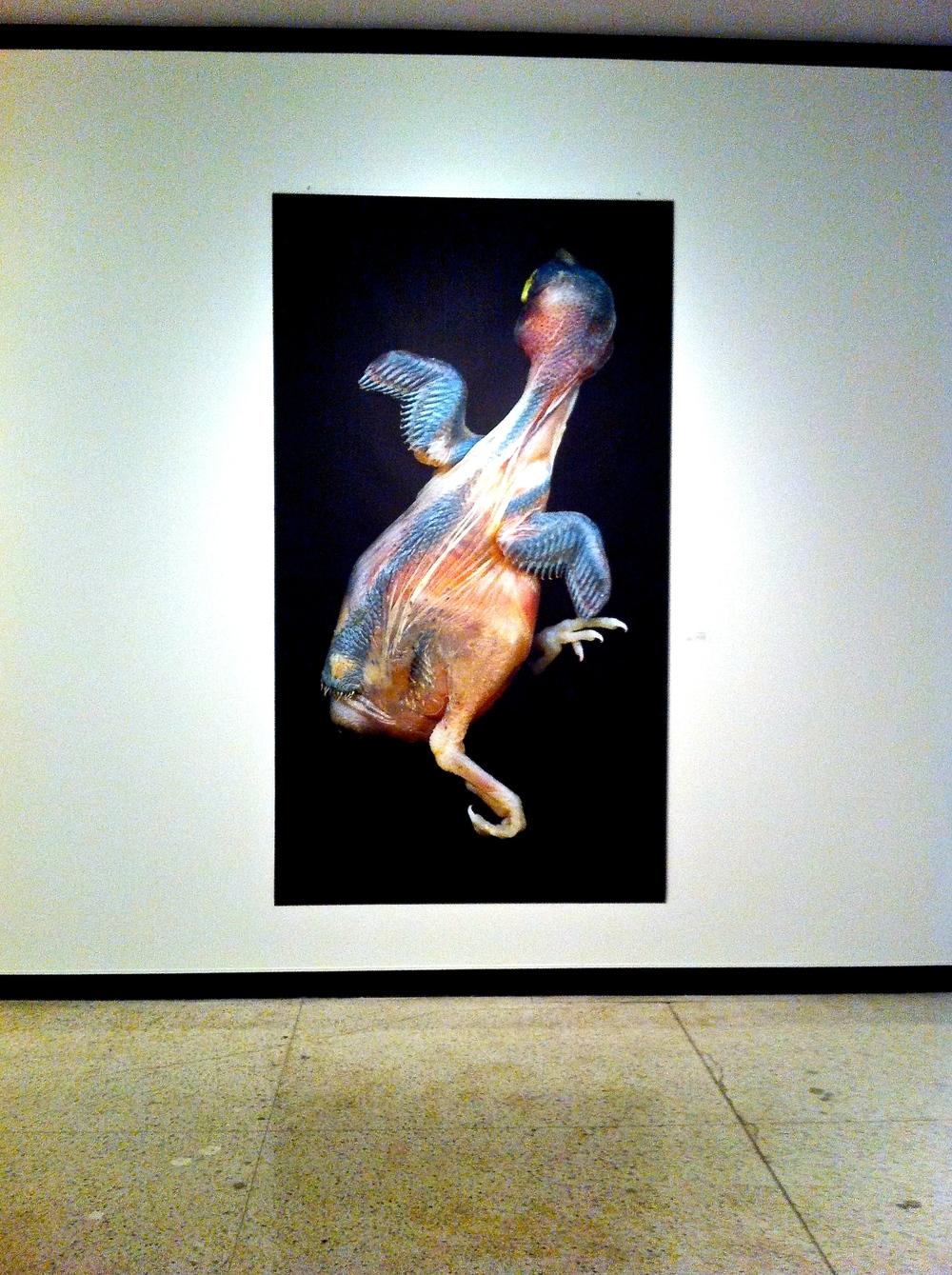 Fledgling , Paul Freeman, 2014