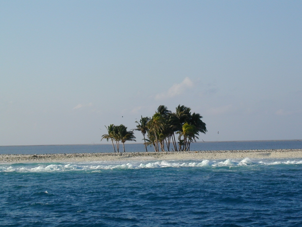 A small patch of trees is the only vegetation on Clipperton Island (source)