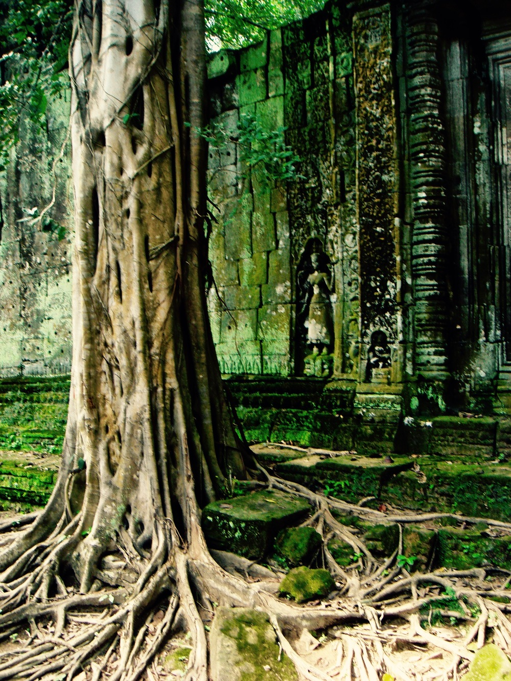 The moss covered ruins of Ta Prohm in Angkor, Cambodia