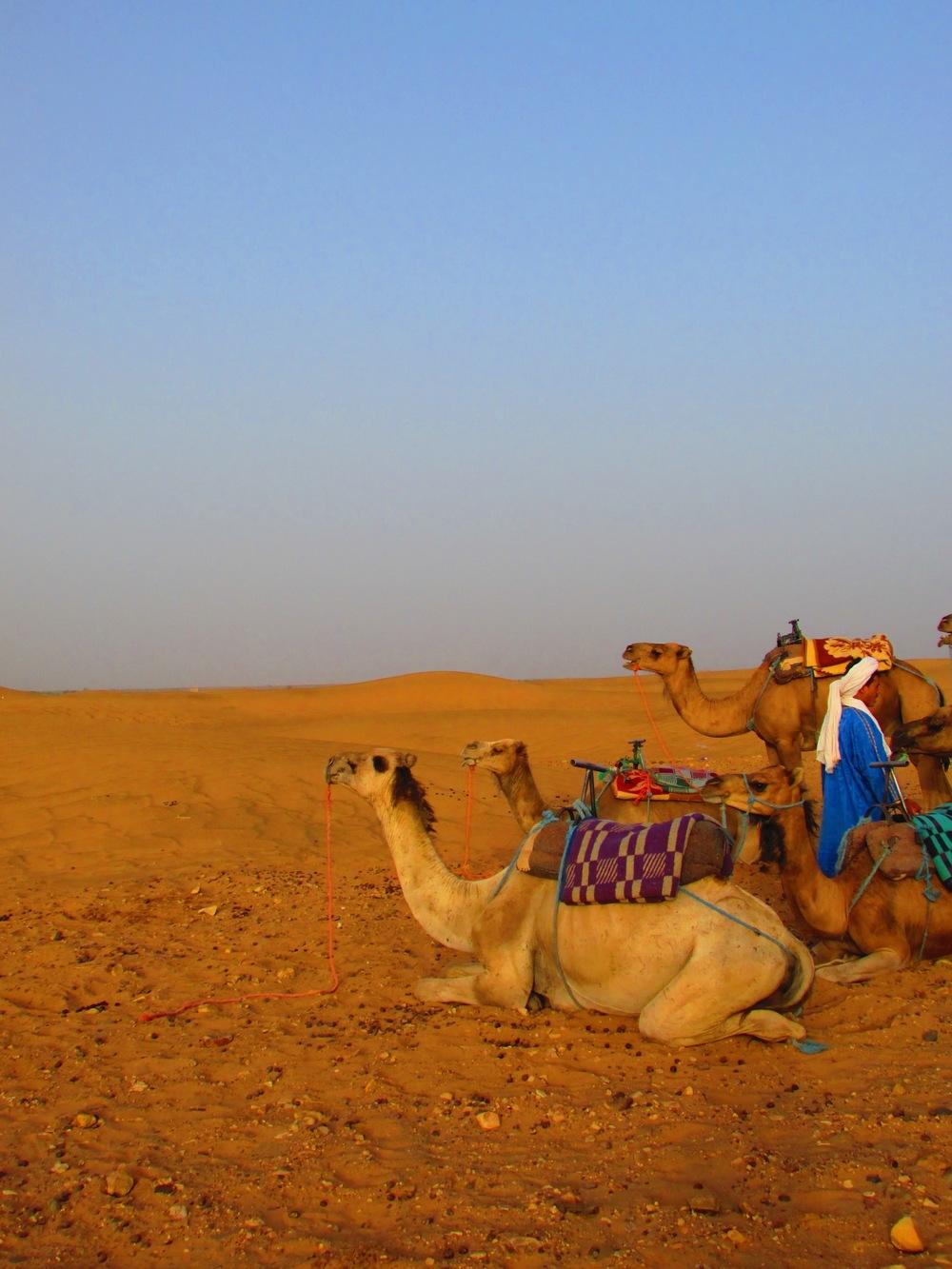 moroccocamels.jpg