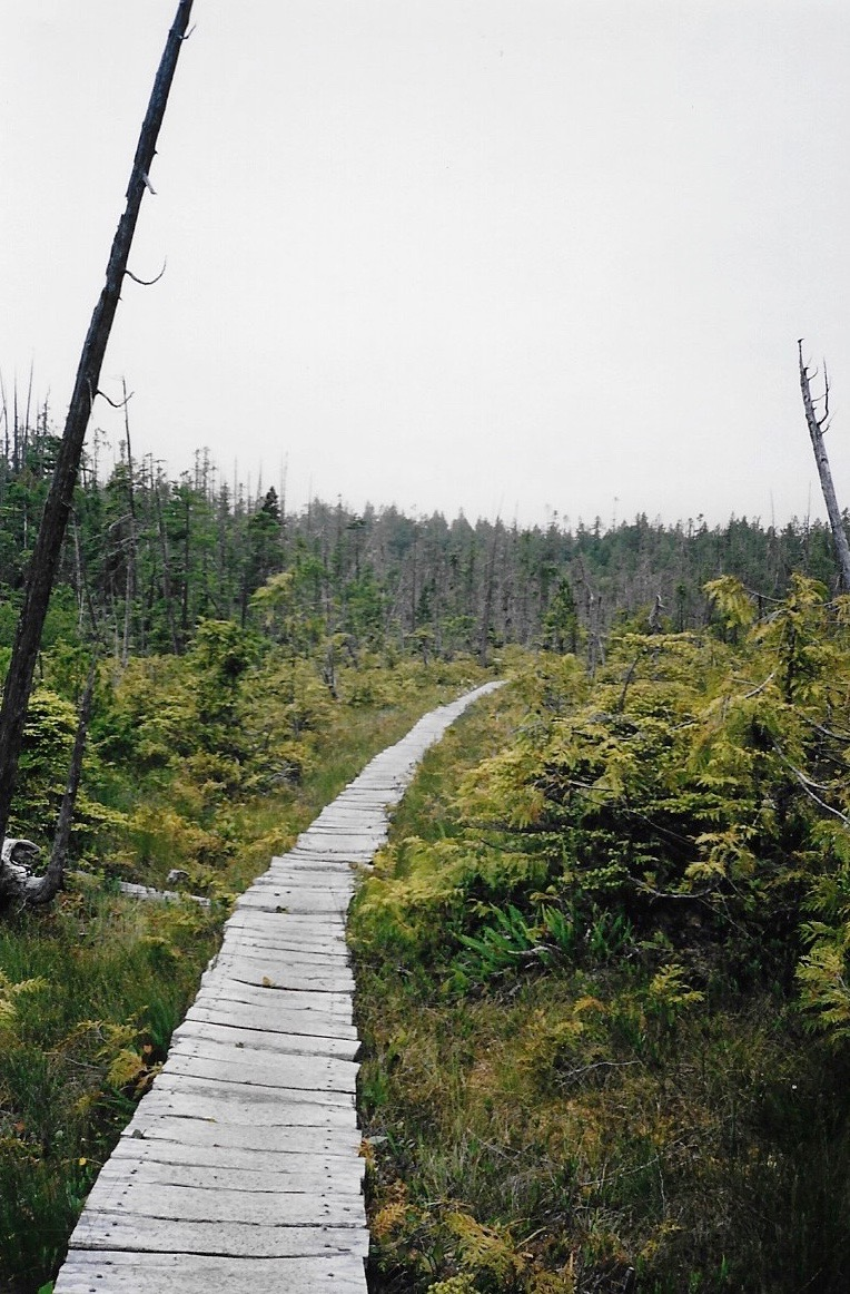This boardwalk ran through an area that had been recently burned in a wildfire. It made for a beautifully eerie bit of trekking.