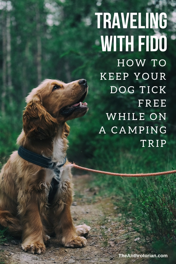 How to keep your dog tick free while camping