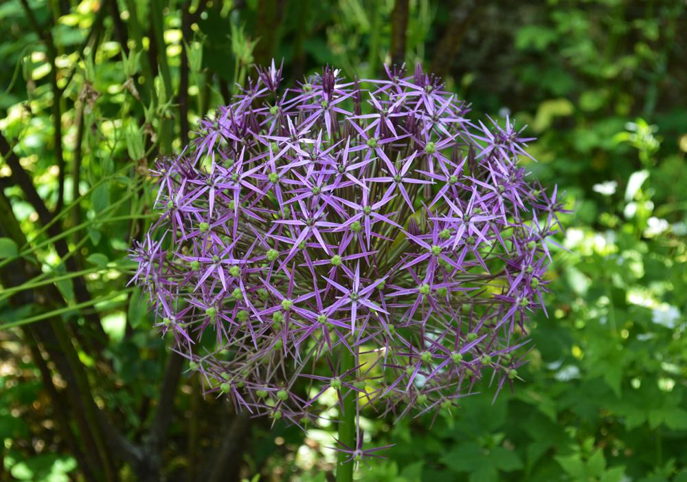 Purple flowerlowres.jpg