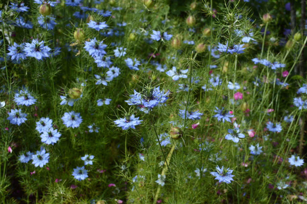 Blue flowers2lowres.jpg