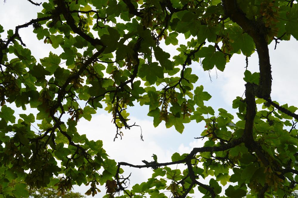 treeleaveslowres.jpg
