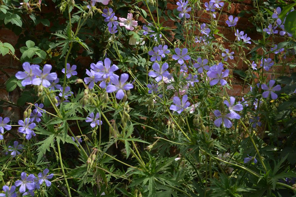 Blue flowerslowres.jpg