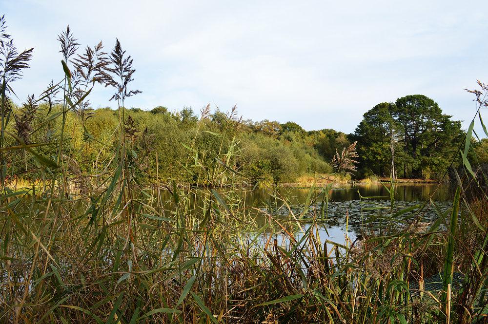 Reeds lake_lowres.jpg