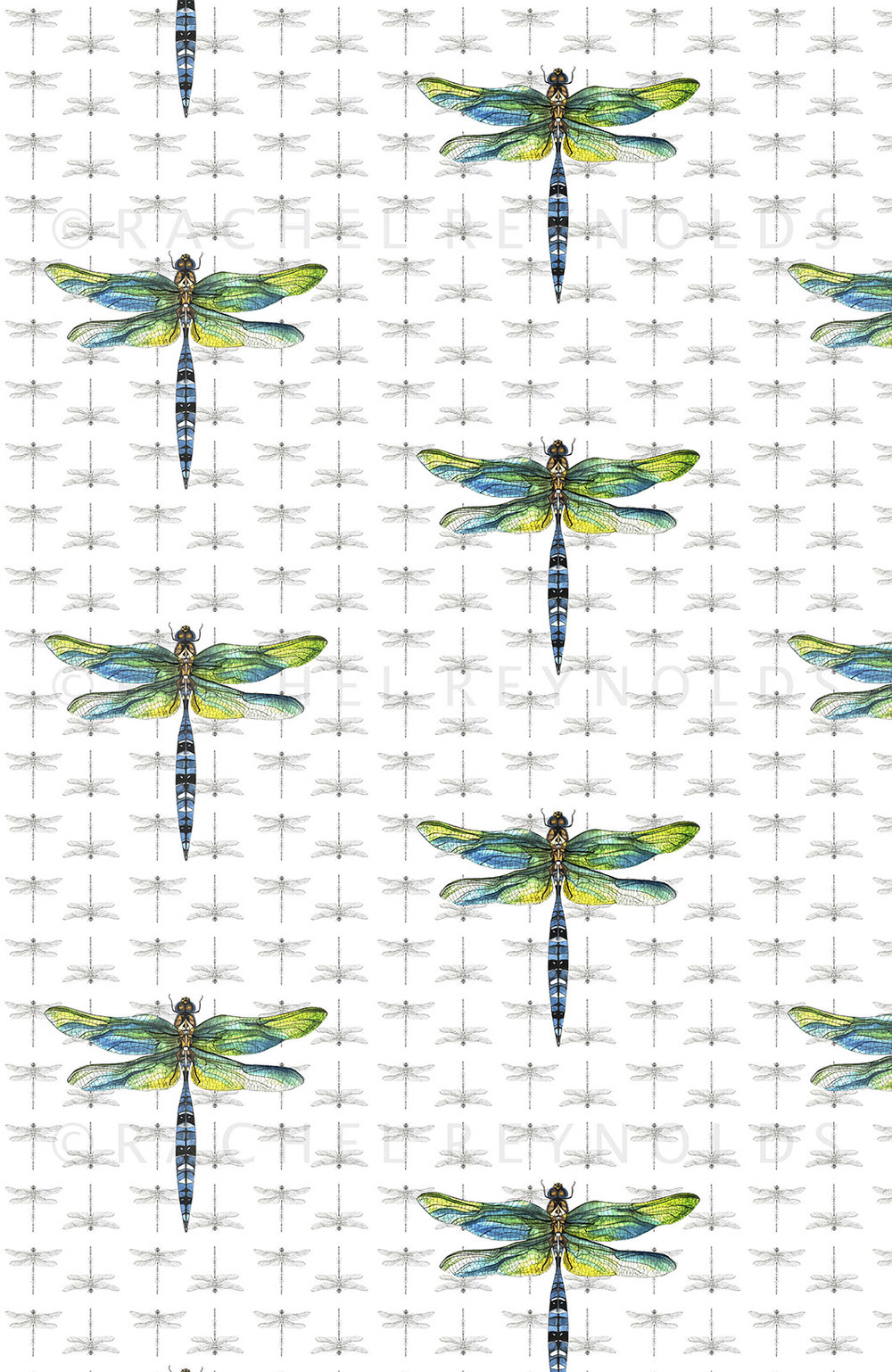 Dragonfly Wallpaper