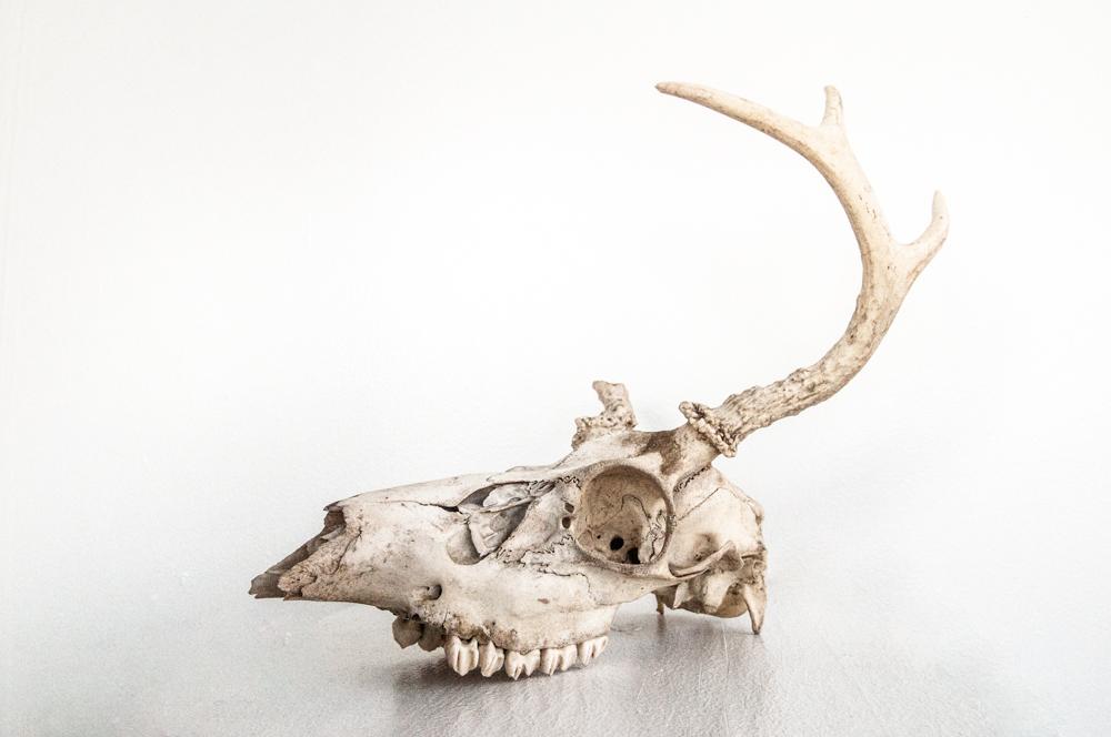 """""""Skull of Totem spirit/given by former resident"""" - 3G"""