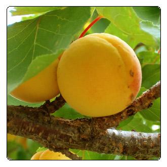 Box_Fruit.jpg
