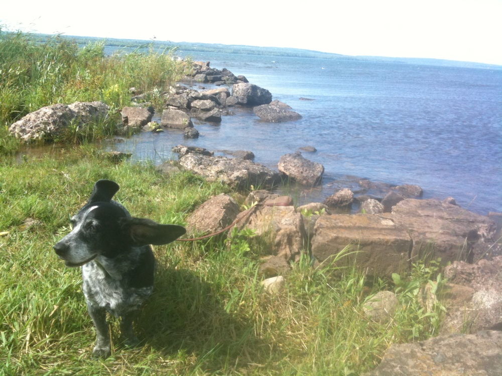 Photo:  Rhapsody on the shore of Lake Superior in Michigan's Upper Peninsula in 2009.