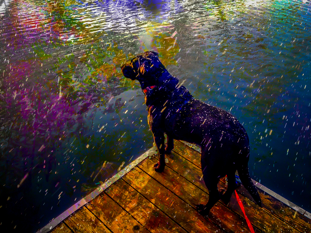 Blizzard on the Dock, Liberty Lake, Washington