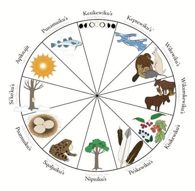 The Mi'kmaw yearly ecological cycle is represented by natural events such as the running of the maple sap (Si'ko'ku's), the croaking of frogs (Sqoljuiku's) and moose calling their mates (Wikumkewiku's). The common 12 Mi'kmaw moon times and full moons take their names from these events. Occasionally a 13th moon time is needed to keep the moontimes in step with the sun. (MI'KMAW MOONS)