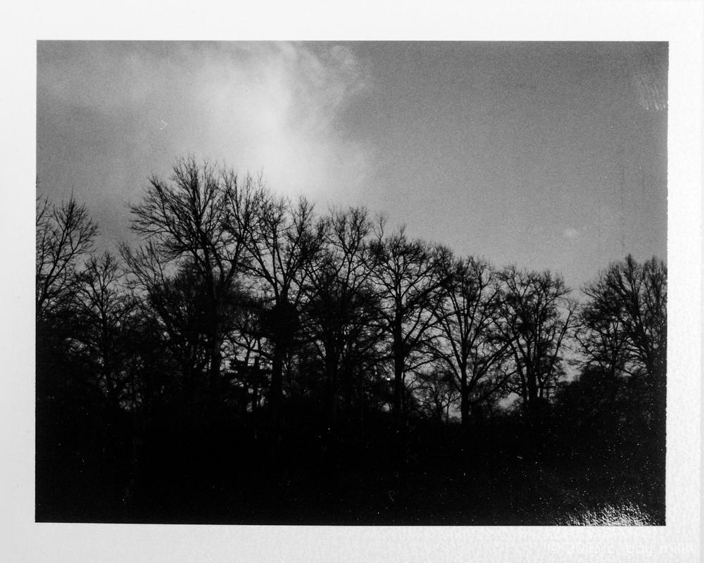 20130401_prospect_park_01.jpg
