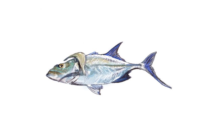 Fish , 2012