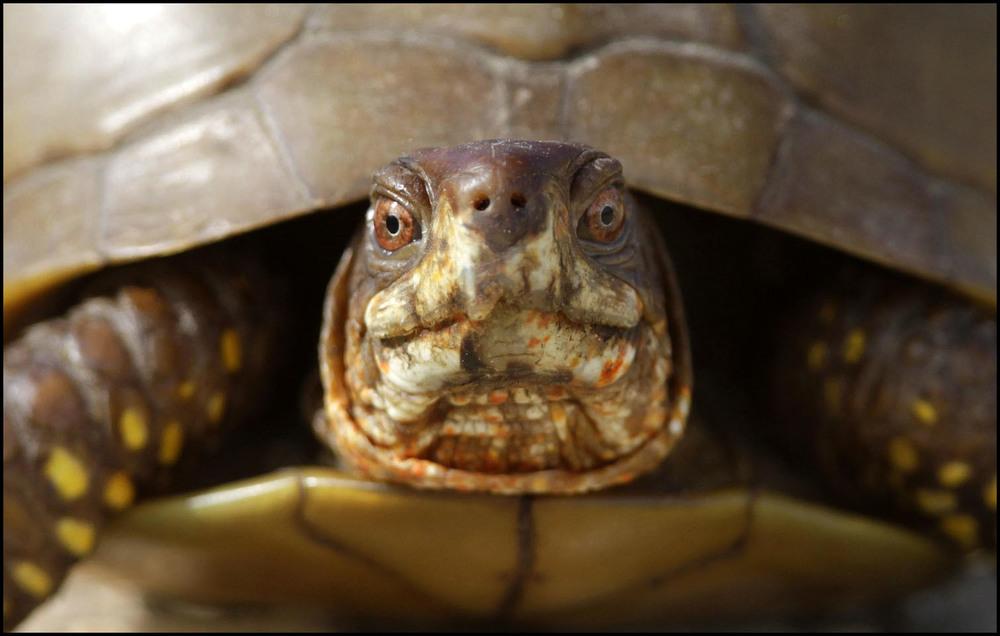 T_Turtle21.jpg